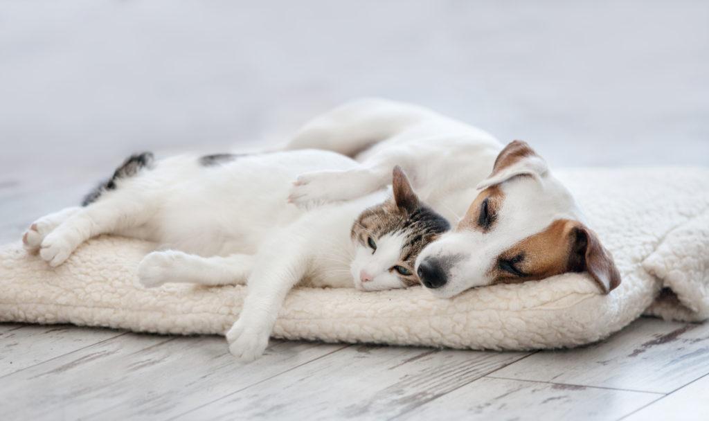 Cani e gatti stressati