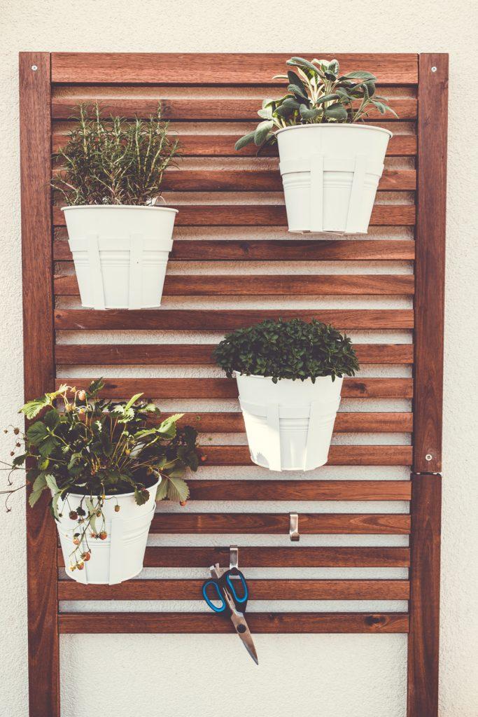 Come comporre il giardino verticale