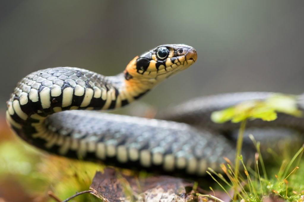 Sognare serpenti, che cosa significa?