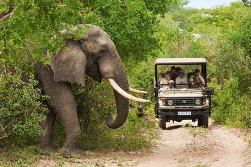 safari sudafrica elefante