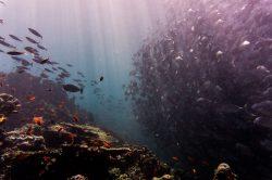 le immersioni subacquee