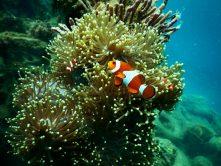 Immersioni subacquee: i luoghi migliori nel Mediterraneo