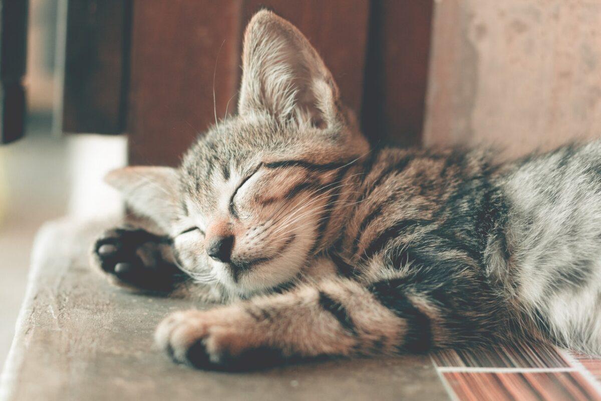 Educare un gatto: come insegnargli dei comandi