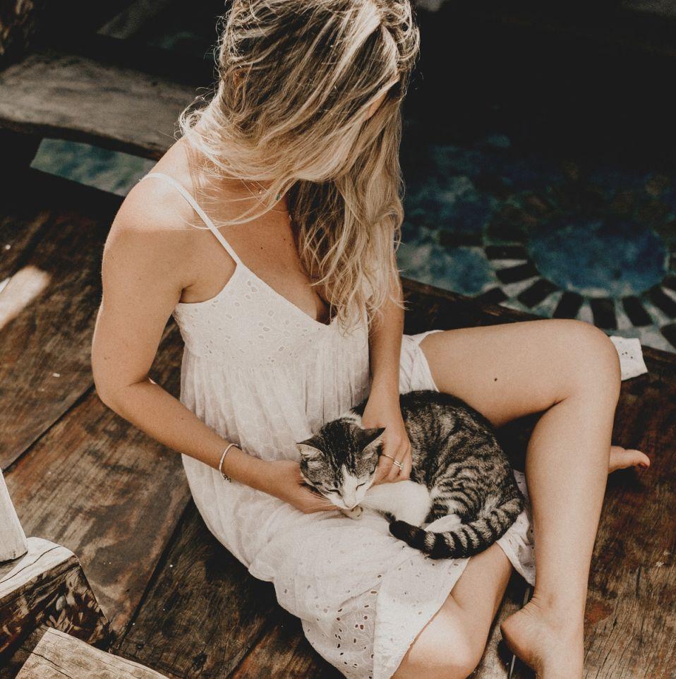 Gatti e gravidanza, le cose da sapere
