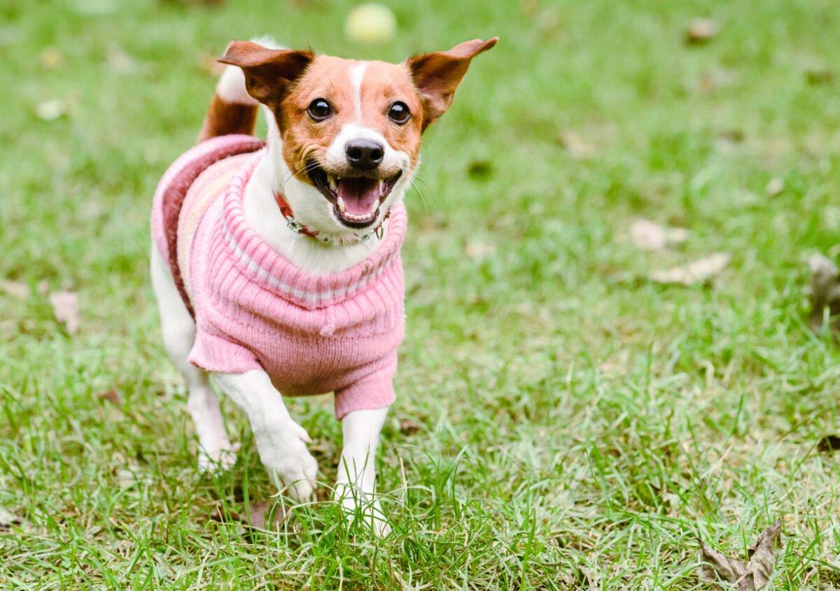 Taglie vestitini dei cani: come districarsi con le misure