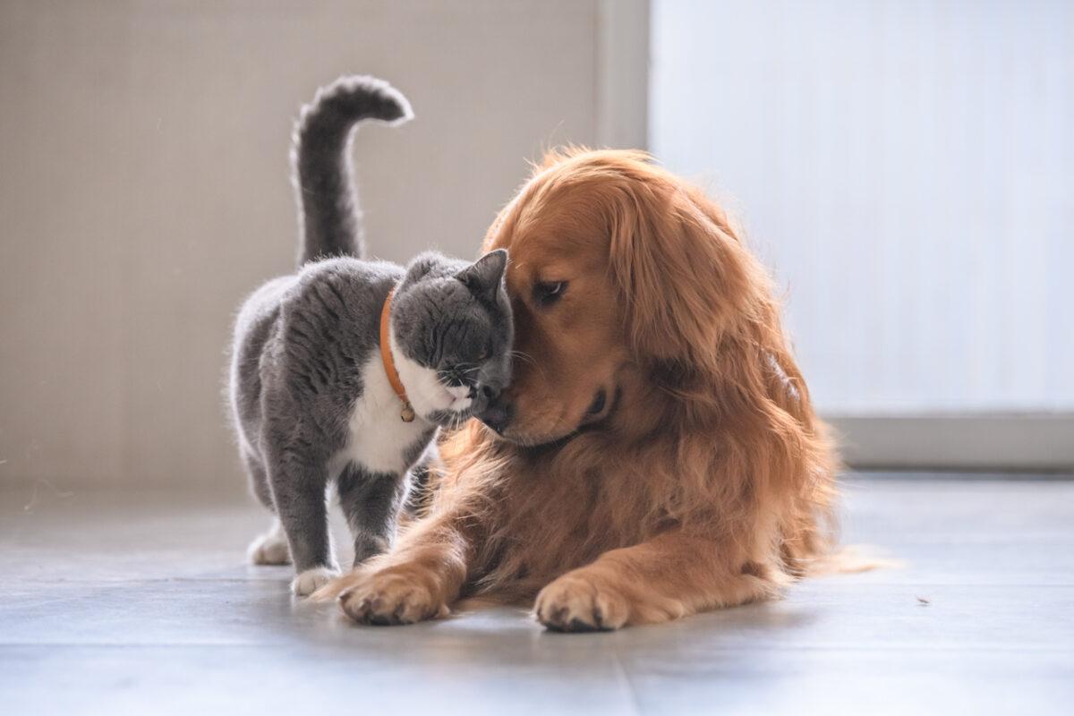 Cani e gatti nello stato di famiglia, tutto quello che c'è da sapere