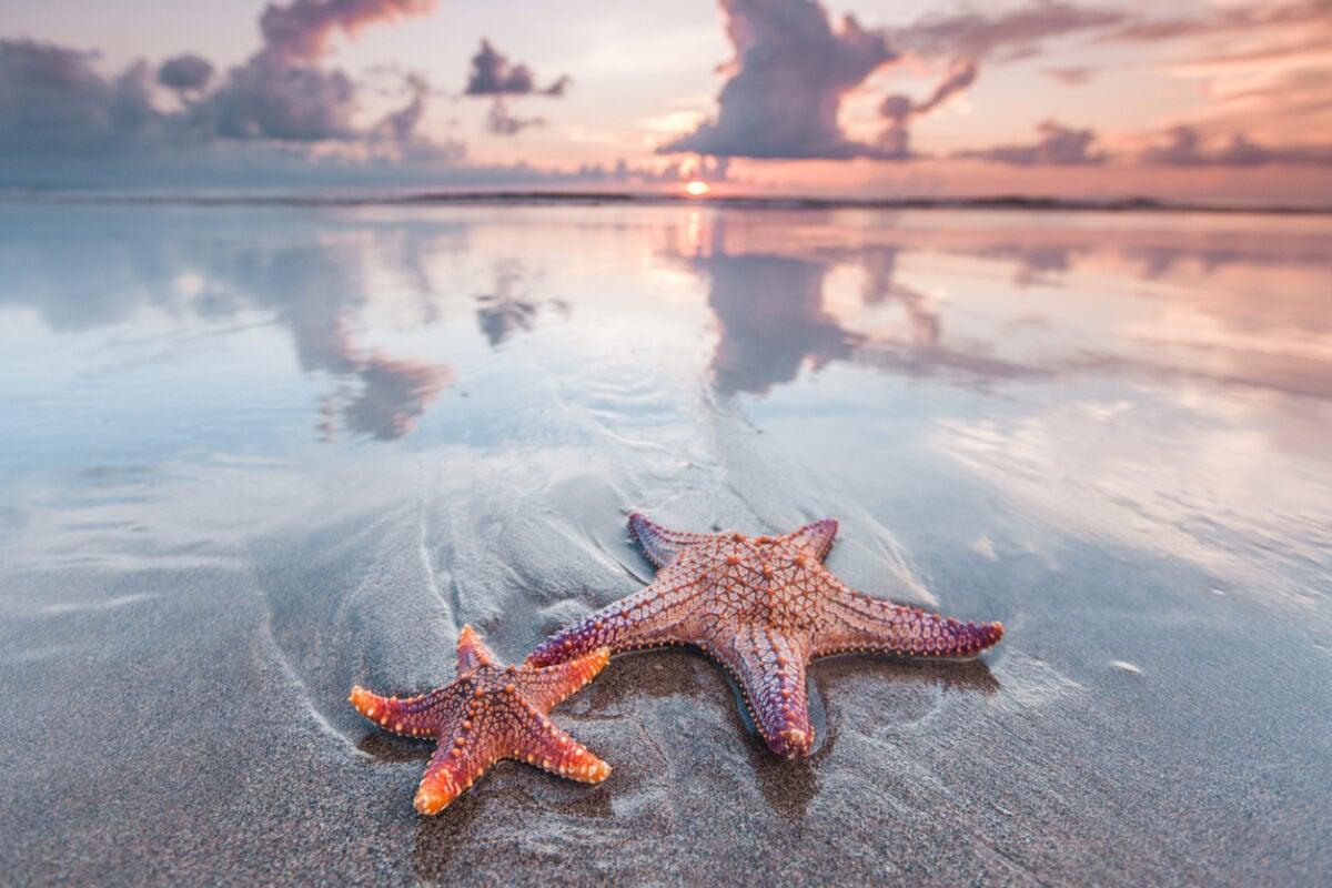 Spiagge dove vedere le stelle marine