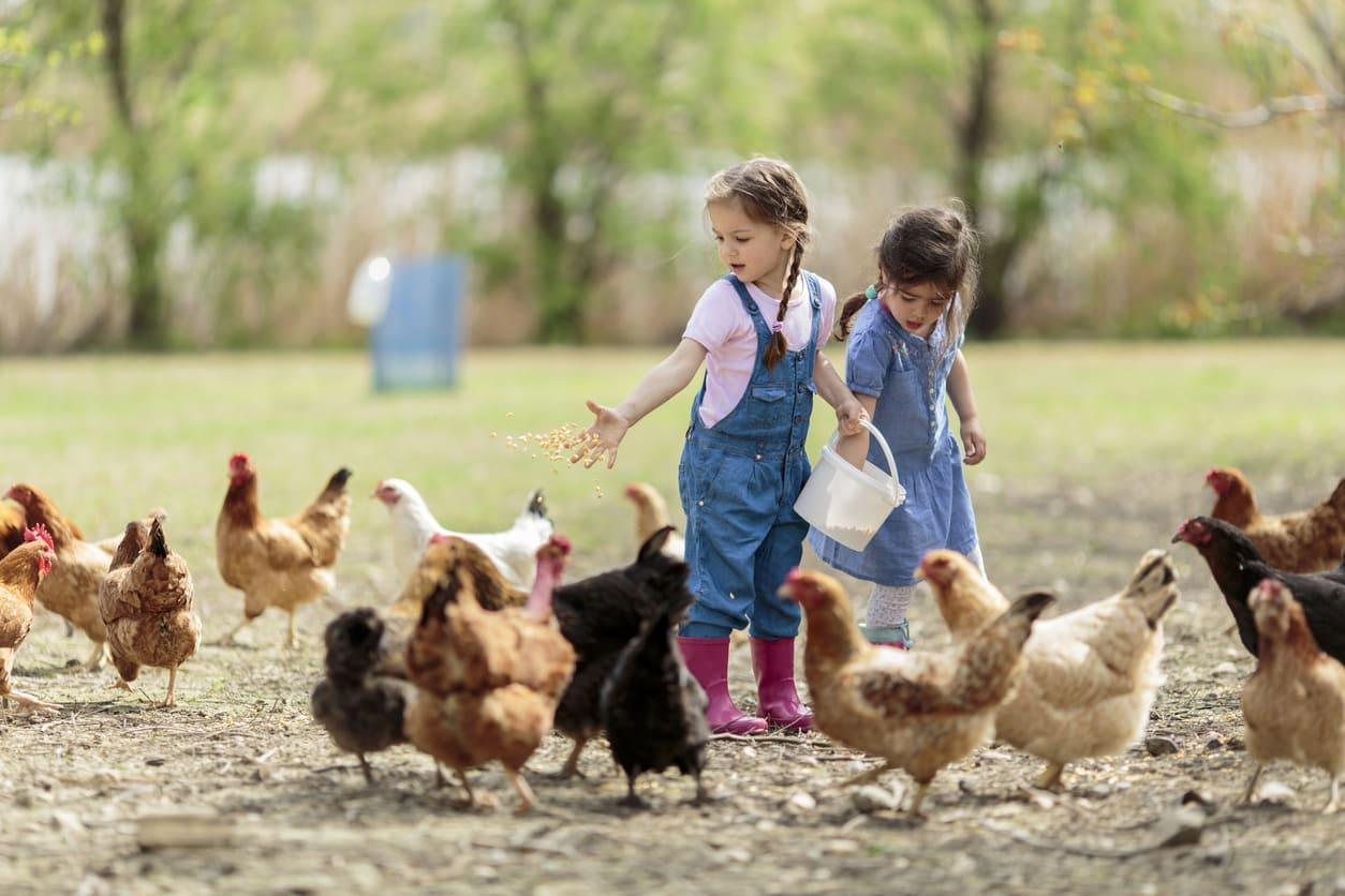 Agriturismo con animali per bambini Milano, dove andare