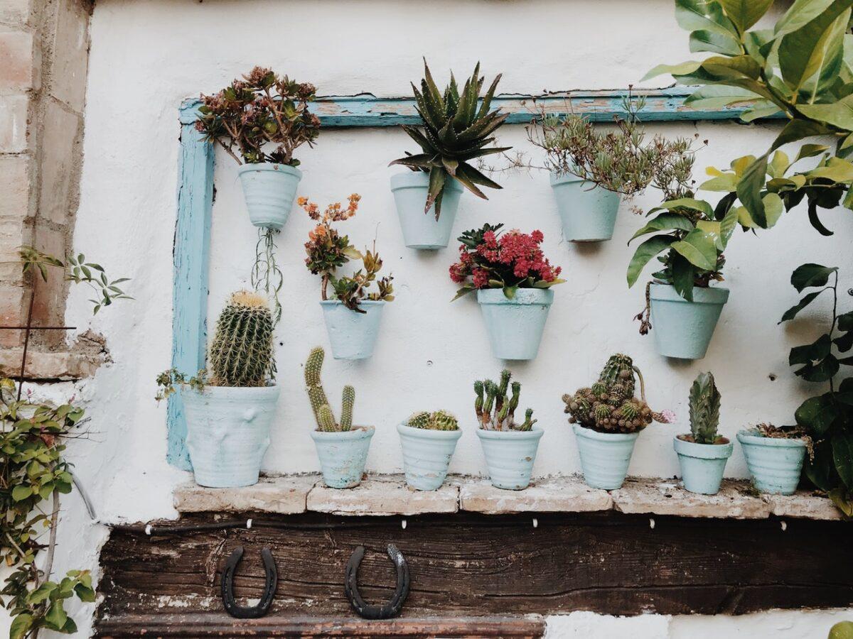 5 piante grasse da interno per arredare casa