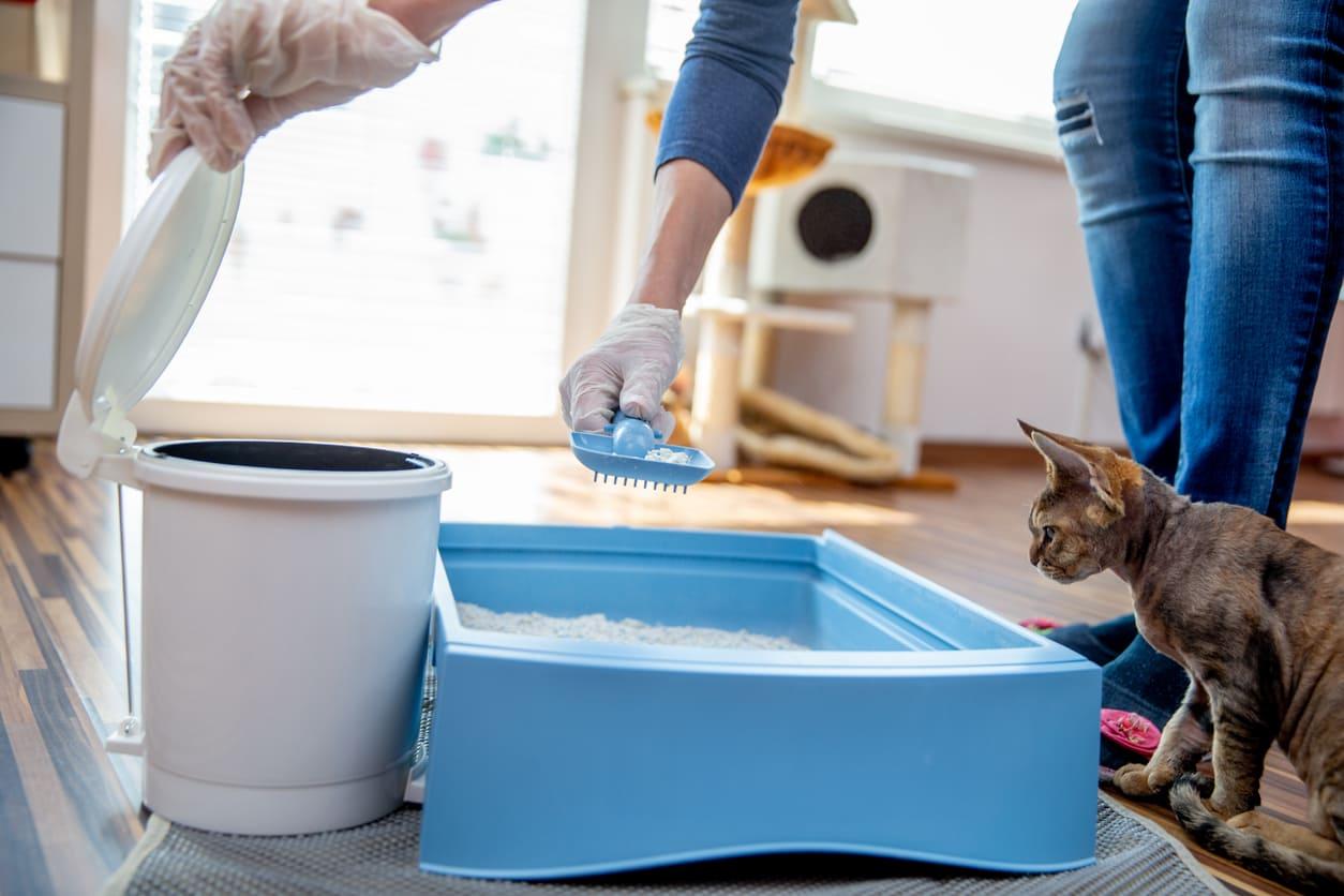 Come scegliere la giusta lettiera per il gatto