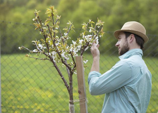 Alcune attività di cura delle piante e dei fiori è meglio svolgerle durante la luna calante come la raccolta, la potatura e la prevenzione dai parassiti
