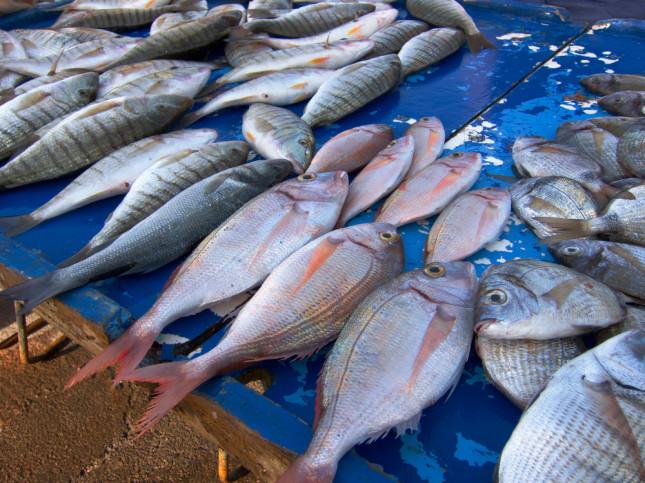 Il mercato del pesce, una delle attrazioni da non perdersi.