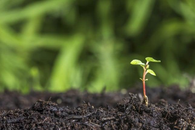 La crescita e la fioritura delle piante può essere più o meno rigogliosa a seconda del periodo del ciclo lunare in cui si semina