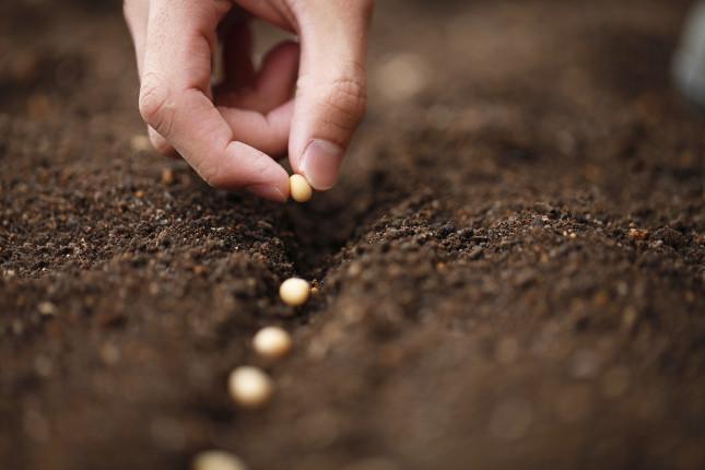 Le fasi lunari hanno effetti su alcune attività da svolgere nell'orto come la semina